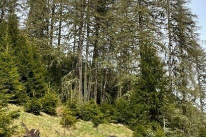 ++ 15,76 ha Wald - mit Top Aussicht auf den Gstoder und gut bestocktem Wald in Tamsweg zu verkaufen ++