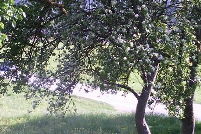 Kleinbauernschaft im Tiroler Oberland mit Wald!
