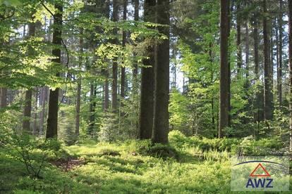 Wald - Wertanlage - Freizeit!