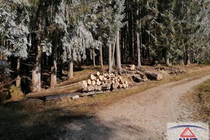 TOP-GELEGENHEIT - Wald mit ca. 2,3 ha zu verkaufen!