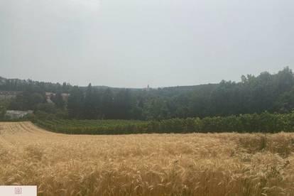 Schönes Grundstück mit Umwidmungspotential (aktuell Wald- & Wiesengürtel)