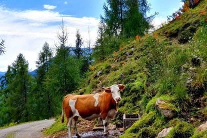Südösterreich: Romantisches Alm-Chaletdorf in beliebtem Schigebiet