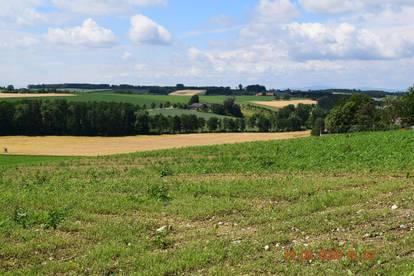 Bauland im Bezirk Linz Land - Gemeinde Hargelsberg