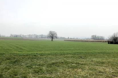 Drei ebene Baugrundstücke in Waizenkirchen