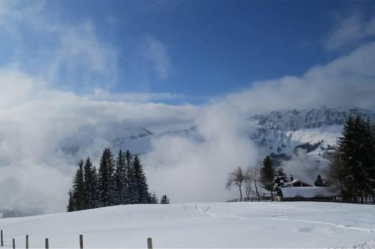 Einzigartige Rarität in den Kitzbüheler Alpen