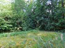 Baugrundstück in bevorzugter Waldwohnlage Holm-Seppensen