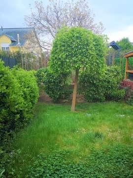Reihenhaus mit Garten in Ludwigshafen Melm