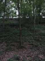 Freizeitgrundstück Waldgründstück mit Durchlaufenden Bach