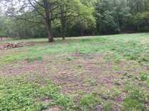 Weidefläche