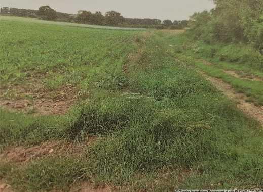 Mehrere Landwirtschaftsflächen in MA-Sandhofen, auch einzeln zu veräußern