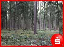 Waldgrundstück westlich von