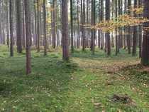 Traumhaftes Waldgrundstück in Berg am