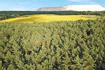 Nachverkauf 4 1 ha Forstliegenschaft