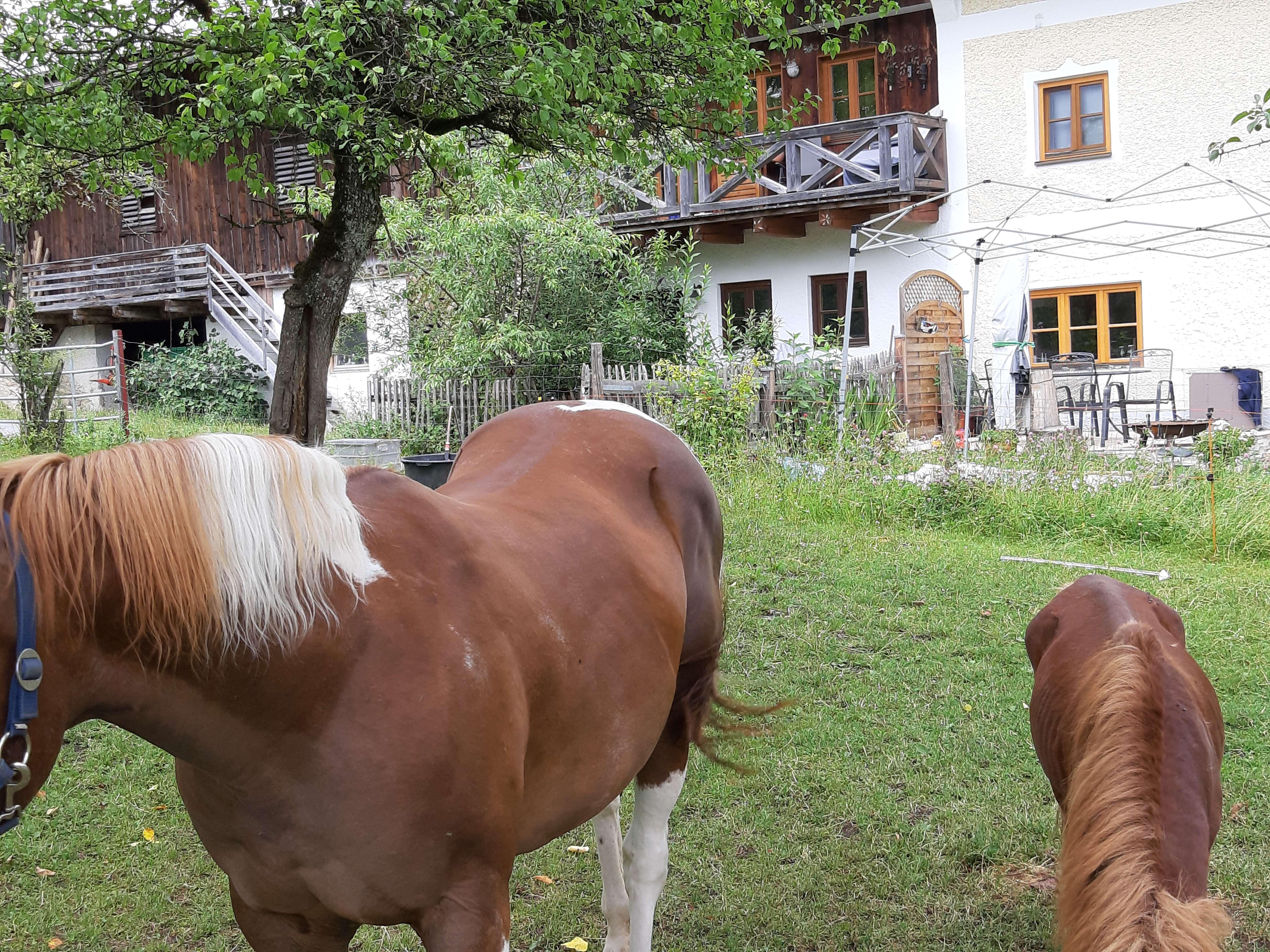 Gepflegte 2-Zimmer-EG-Wohnung mit Balkon in Aschau im Chiemgau