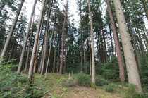 Waldgrundstück - Ideal für den eigenen