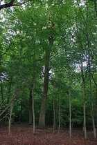 Waldgrundstücke in 67098 Bad Dürkheim