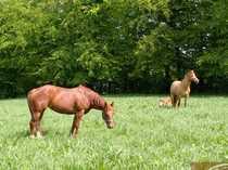 Kleiner Pferdehof in Dorfrandlage mit
