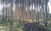 Bild Brennholzwald auch für privat geeignet