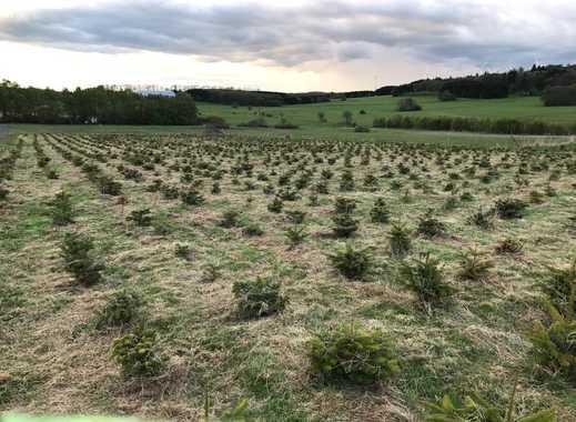 Weihnachtsbaum Christbaum Grundstück Plantage Kultur Freizeit Ausgleichsfläche
