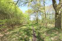 """Bild Etwa 73.621 m² Mischwald """"Heidkamp"""" im Außenbereich der Gemeinde"""