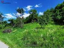 Grundstück mit Weinberg und Geschirrhütte