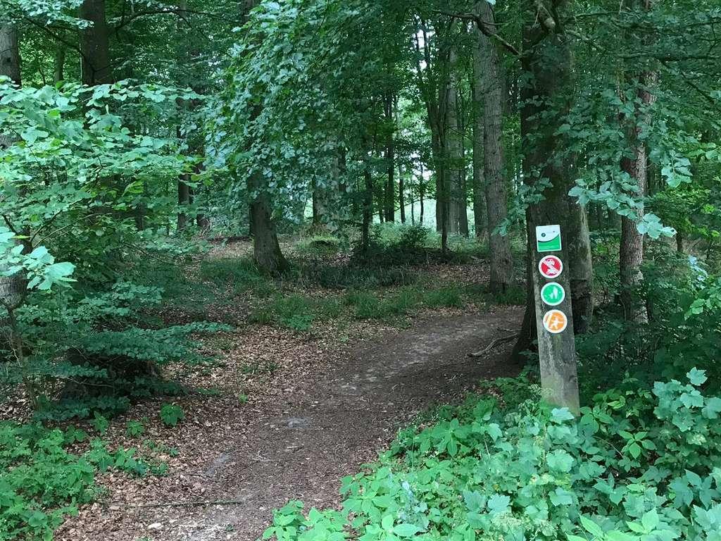 der rückwärtige Wald