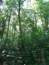 Mischwaldgrundstück am Erfurter Stadtrand mit