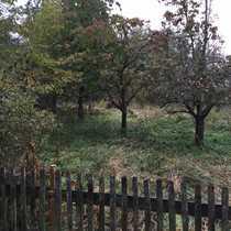 wunderschönes Gartengrundstück eingewachsen in viel