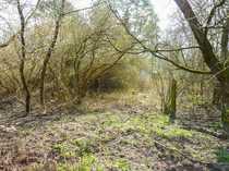 Großes Grundstück direkt am Wald