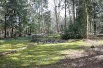 Schönes Waldgrundstück in Stuckenborstel für