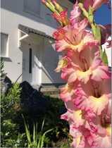Wunderschöne teilmöblierte Doppelhaushälfte für die