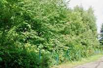 Baugrundstück in Oberlungwitz bei Chemnitz