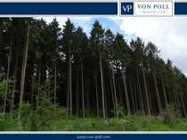 18 080 m² großem Waldgrundstück