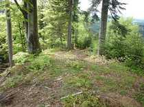 Bild 15 ha Fichten-/Mischwald im Allgäu, ca. 60 Jahre alt, schnellwüchsig, gut erschlossen