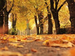 Herbstspaziergang ....(Image)