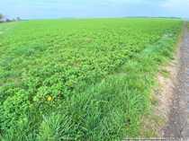 Ackerland in Vettweiß