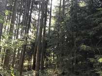 Bild Waldfläche in Schierling zu verkaufen ca. 1 ha