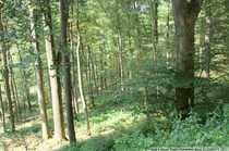 Bild Waldfläche