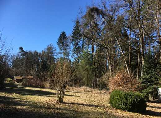 Freizeitgrundstück in einem Waldstück bei Regensburg
