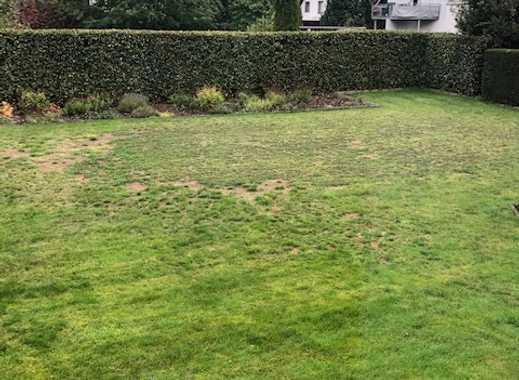 3 ZKB im EG mit Garten