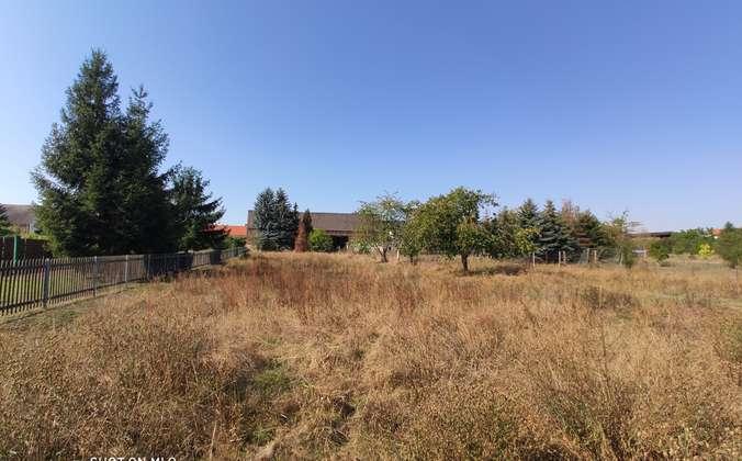 Gartenland (3)