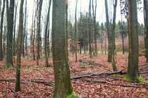 Bild Waldflächen mit angrenzender Kleingartenanlage in Hagen