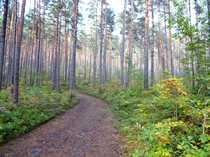 Wald der Zukunft für neue