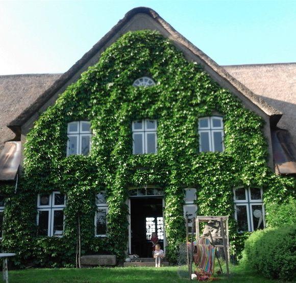 reetgedeckter hof mit 17 zimmern in nordfriesland kreis galmsb ll. Black Bedroom Furniture Sets. Home Design Ideas
