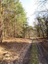 Waldgrundstück südlich Berlins