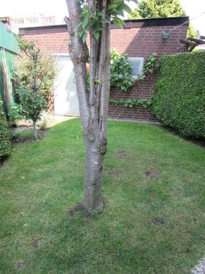 Garten 1