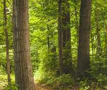 Wirtschaftswald rd 20 08 ha