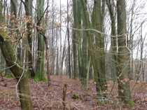 Bild GANESHA-IMMOBILIEN...Holz aus dem eigenen Wald - Waldgrundstücke zu verkaufen !