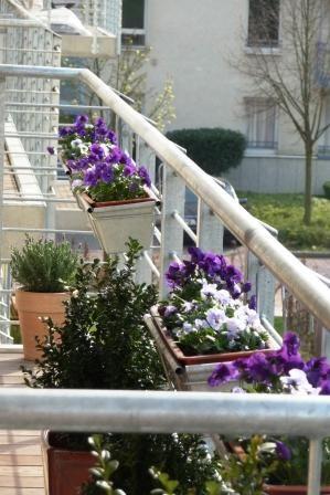 Frühlingsgefühle am Balkon