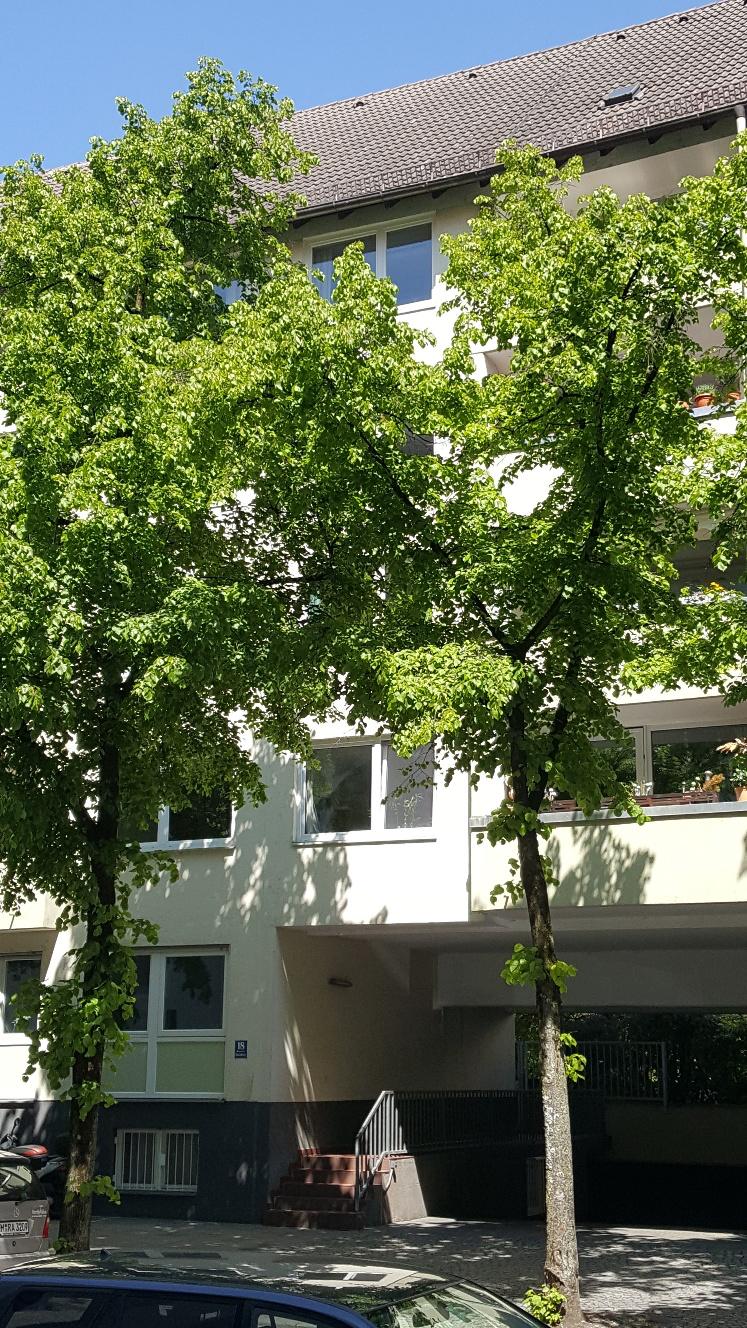 Stilvolle, modernisierte u. teilmöblierte 2-Zimmer-Wohnung mit Balkon, EBK in Untergiesing, München